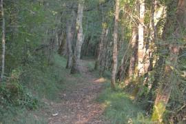 Randonnée et marche nordique 10 km