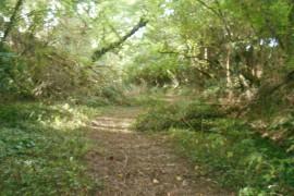 trail 19