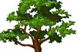Le Chêne Vert Trail