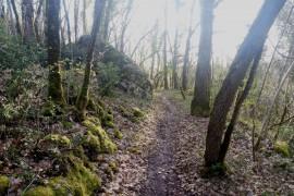 Trail nocturne 16 km 250m D+