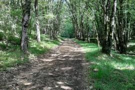 TRAIL 11 km (CHALLENGE DEPARTEMENTAL)